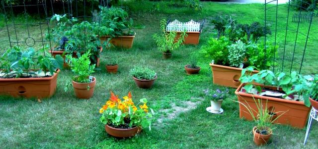 Garden June 25