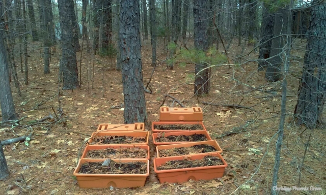 My Grow Boxes over-wintering in the woods
