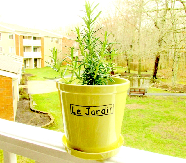 Jardin in pot ED (4)-001